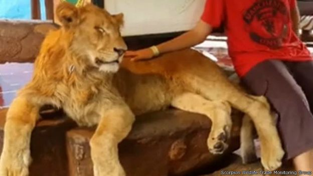 løve 3