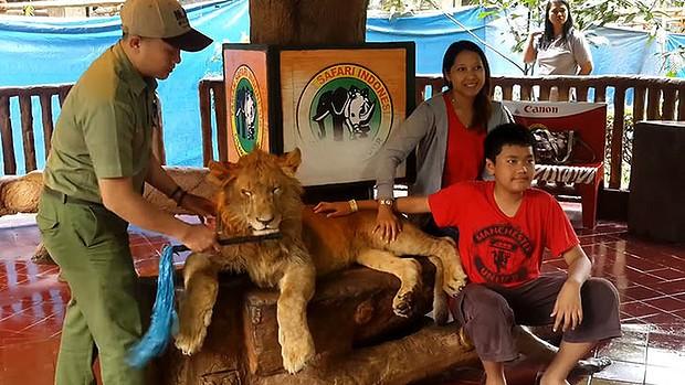 løve poserer